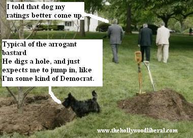 George Bush's Dog, in the yard 050205