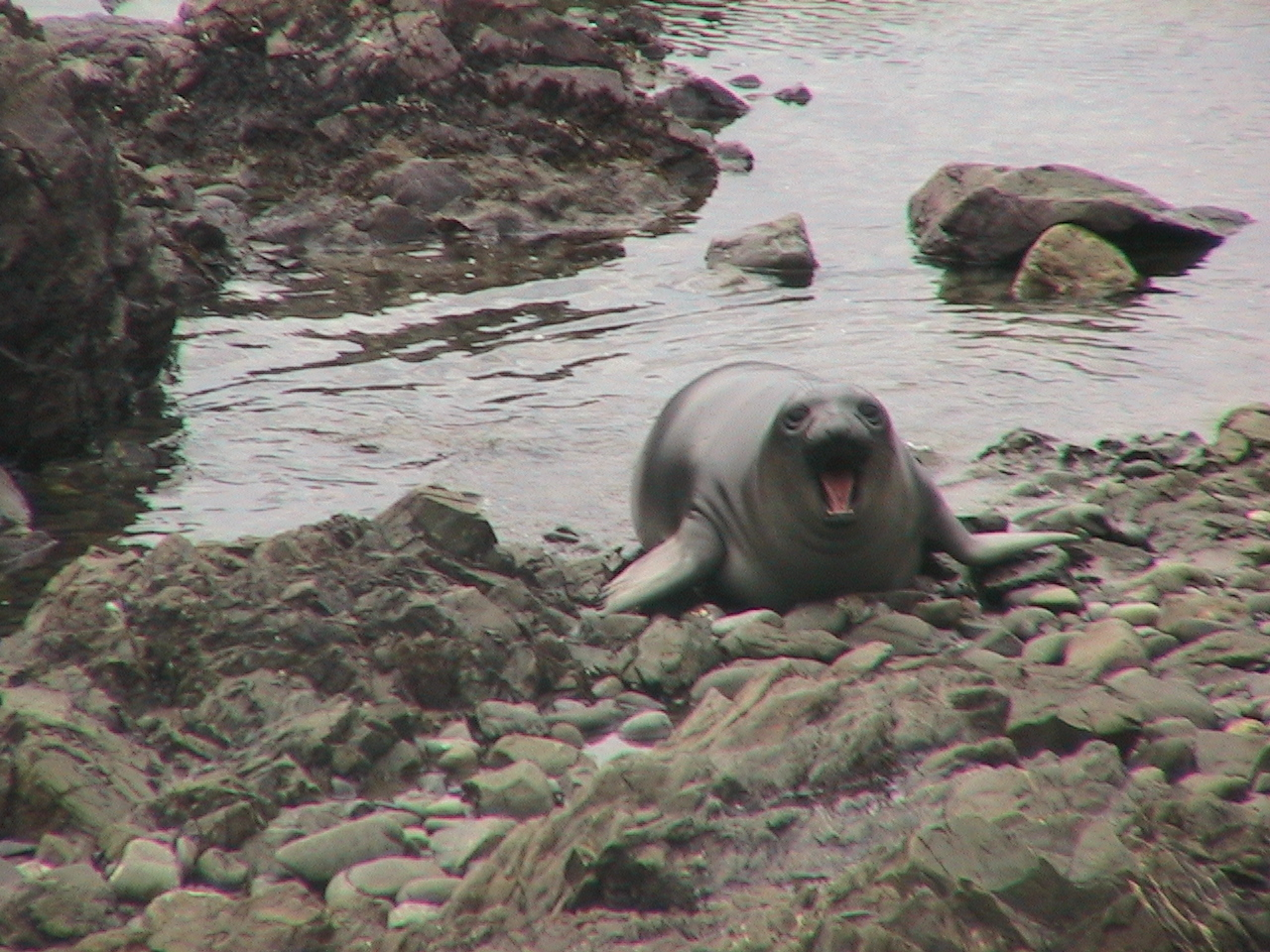 Go up to Big Sur this weekend and see The Elephant Seals