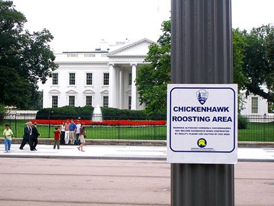 The Whitehouse is a protected Chickenhawk roosting area 083105
